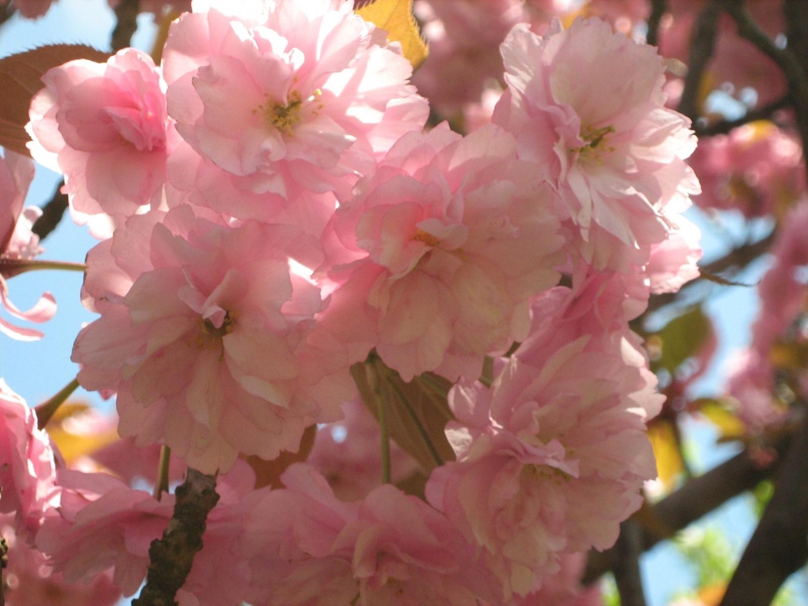 6491 скачать обои Растения, Цветы - заставки и картинки бесплатно
