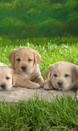 3925 download wallpaper Animals, Dogs screensavers and pictures for free