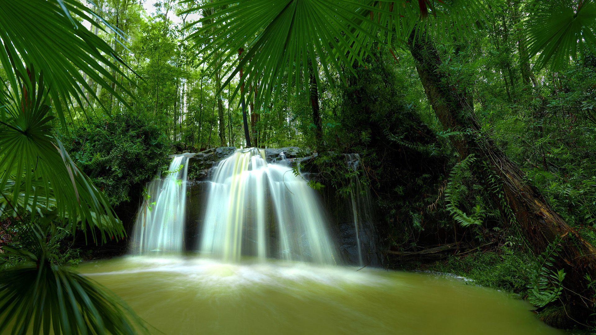 101689 免費下載壁紙 性质, 叶, 瀑布, 丛林, 灌木丛, 扎罗斯利, 热带, 热带地区, 热的, 热, 湿度, 青菜, 棕榈 屏保和圖片