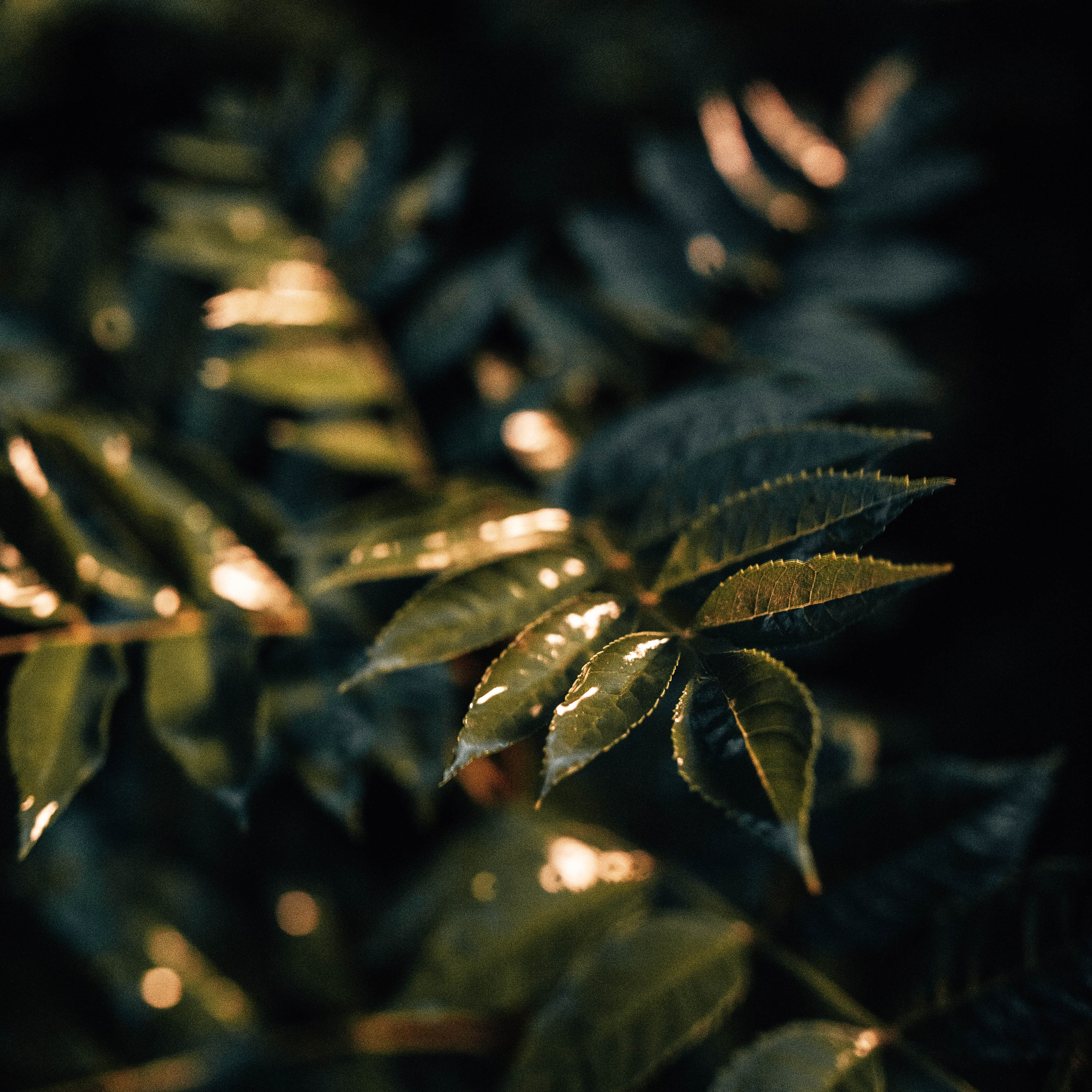 154231 скачать обои Макро, Листья, Мокрый, Зеленый, Растение - заставки и картинки бесплатно