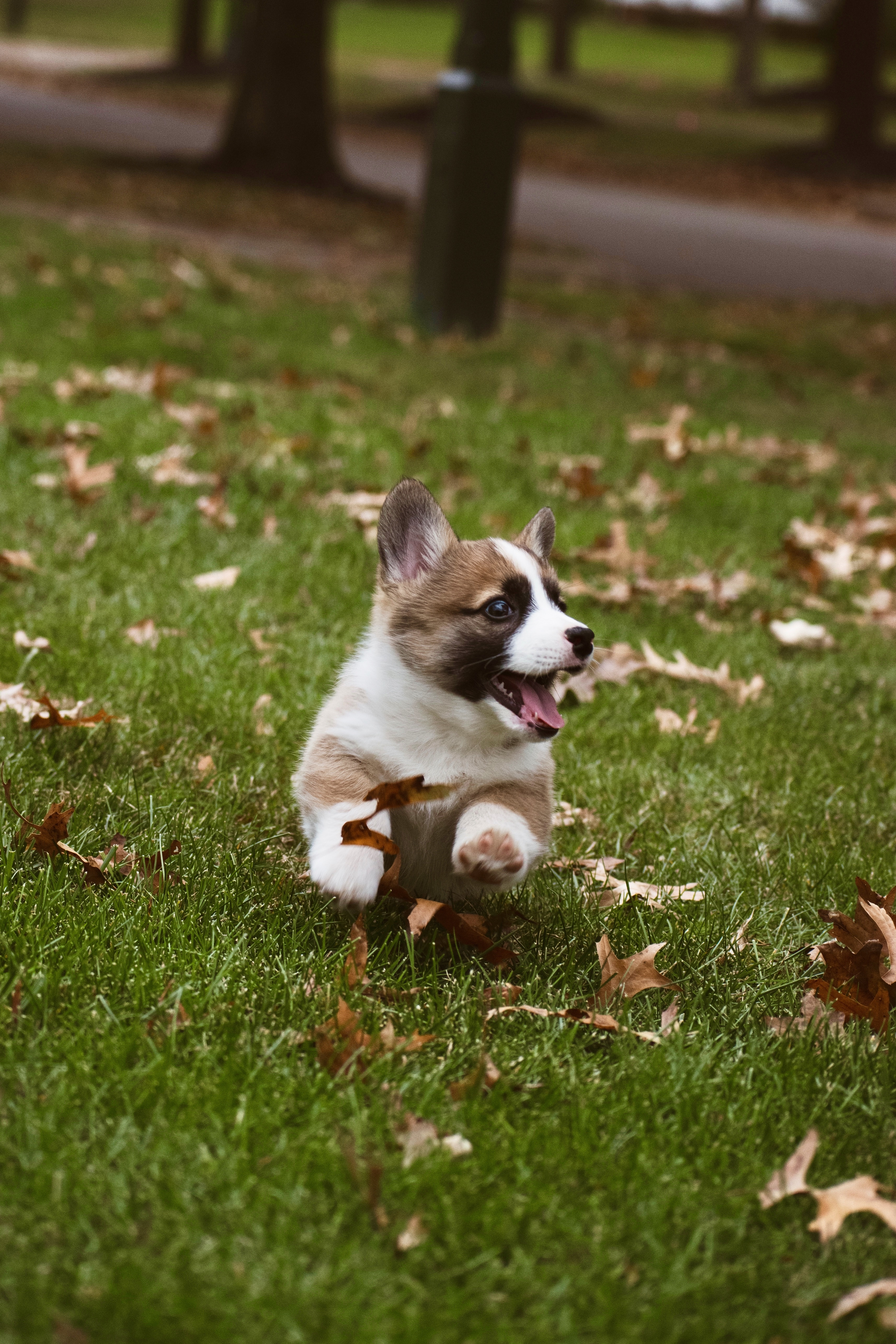 82190 download wallpaper Funny, Animals, Dog, Corgi screensavers and pictures for free