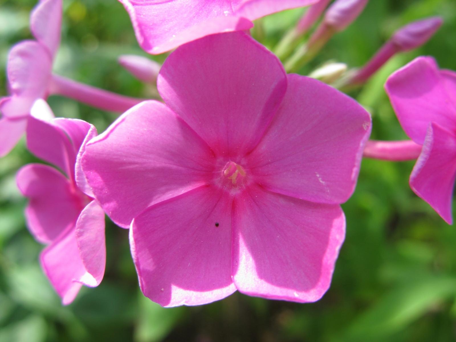 5048 скачать обои Растения, Цветы - заставки и картинки бесплатно