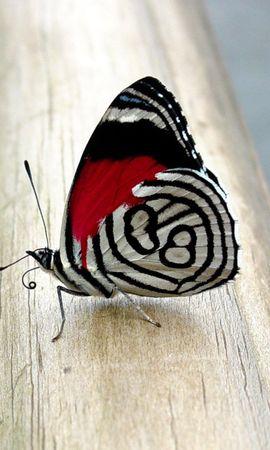16607 Salvapantallas y fondos de pantalla Insectos en tu teléfono. Descarga imágenes de Mariposas, Insectos gratis