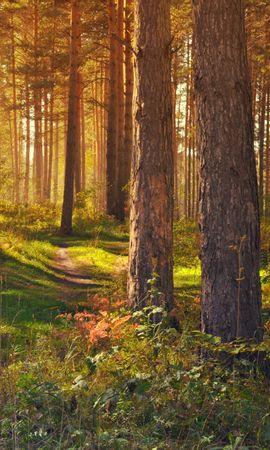 64866 скачать обои Природа, Лес, Тропинка, Деревья, Лето, Пейзаж - заставки и картинки бесплатно