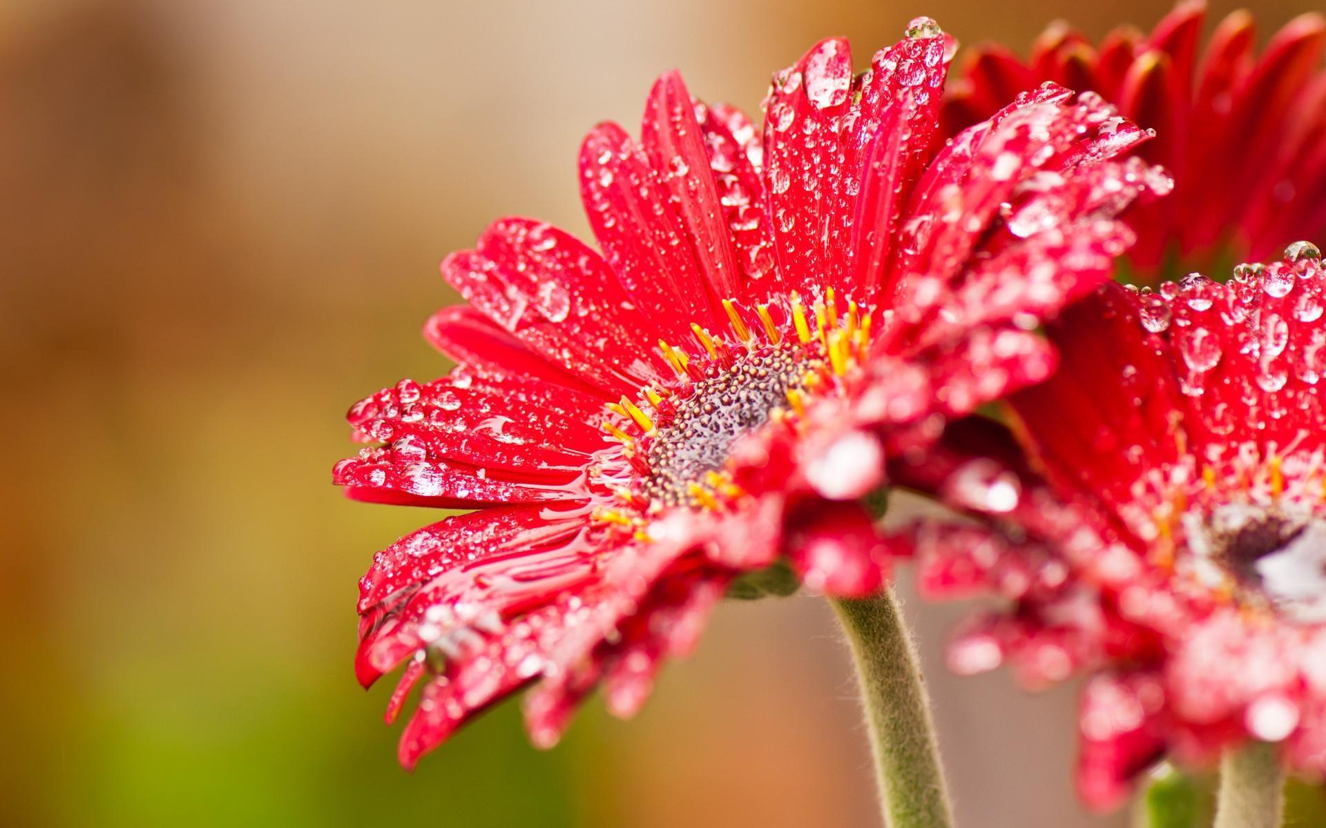 34307 скачать обои Растения, Цветы - заставки и картинки бесплатно