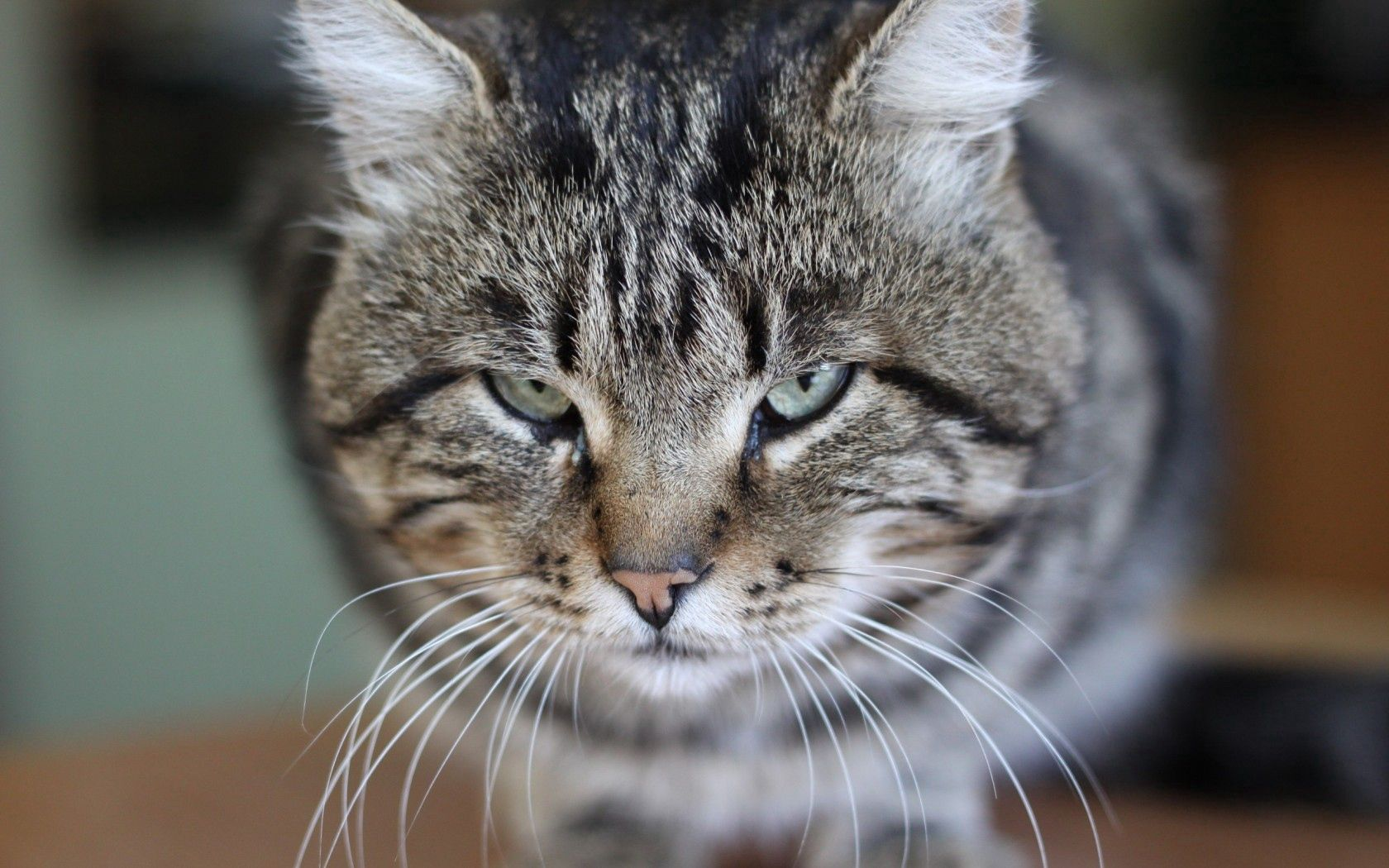 94294 Screensavers and Wallpapers Photo for phone. Download Animals, Cat, Background, Eyes, Photo pictures for free