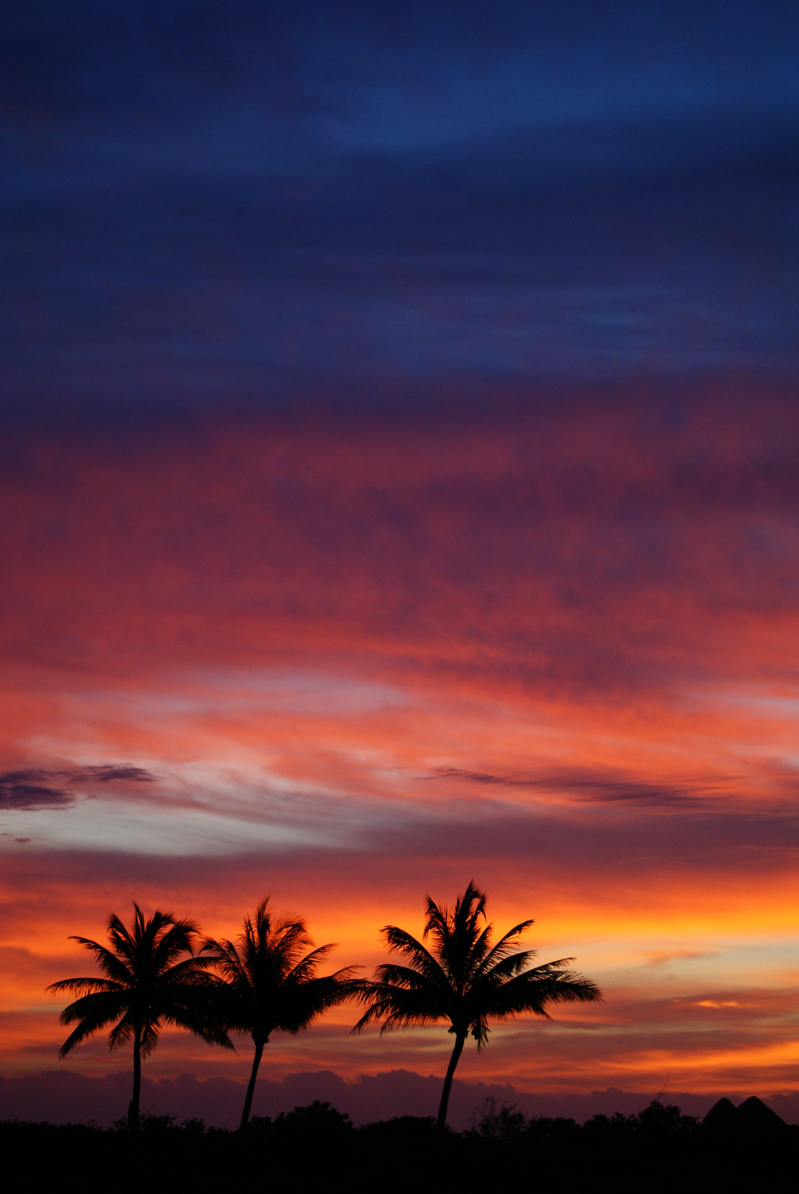 51728 download wallpaper Nature, Silhouettes, Sunset, Sky, Clouds, Tropics, Palms screensavers and pictures for free
