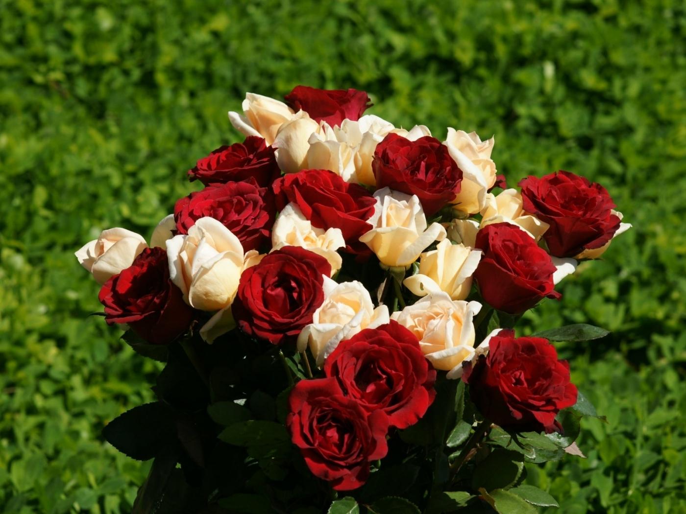 48425 скачать обои Растения, Цветы - заставки и картинки бесплатно