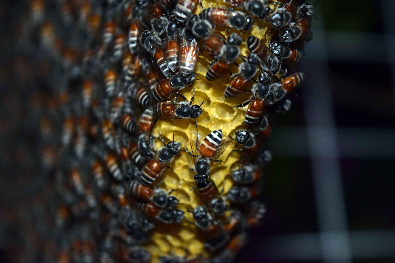 114079 Hintergrundbild herunterladen Bienen, Makro, Nahaufnahme, Honig, Bienenwabe, Waben - Bildschirmschoner und Bilder kostenlos