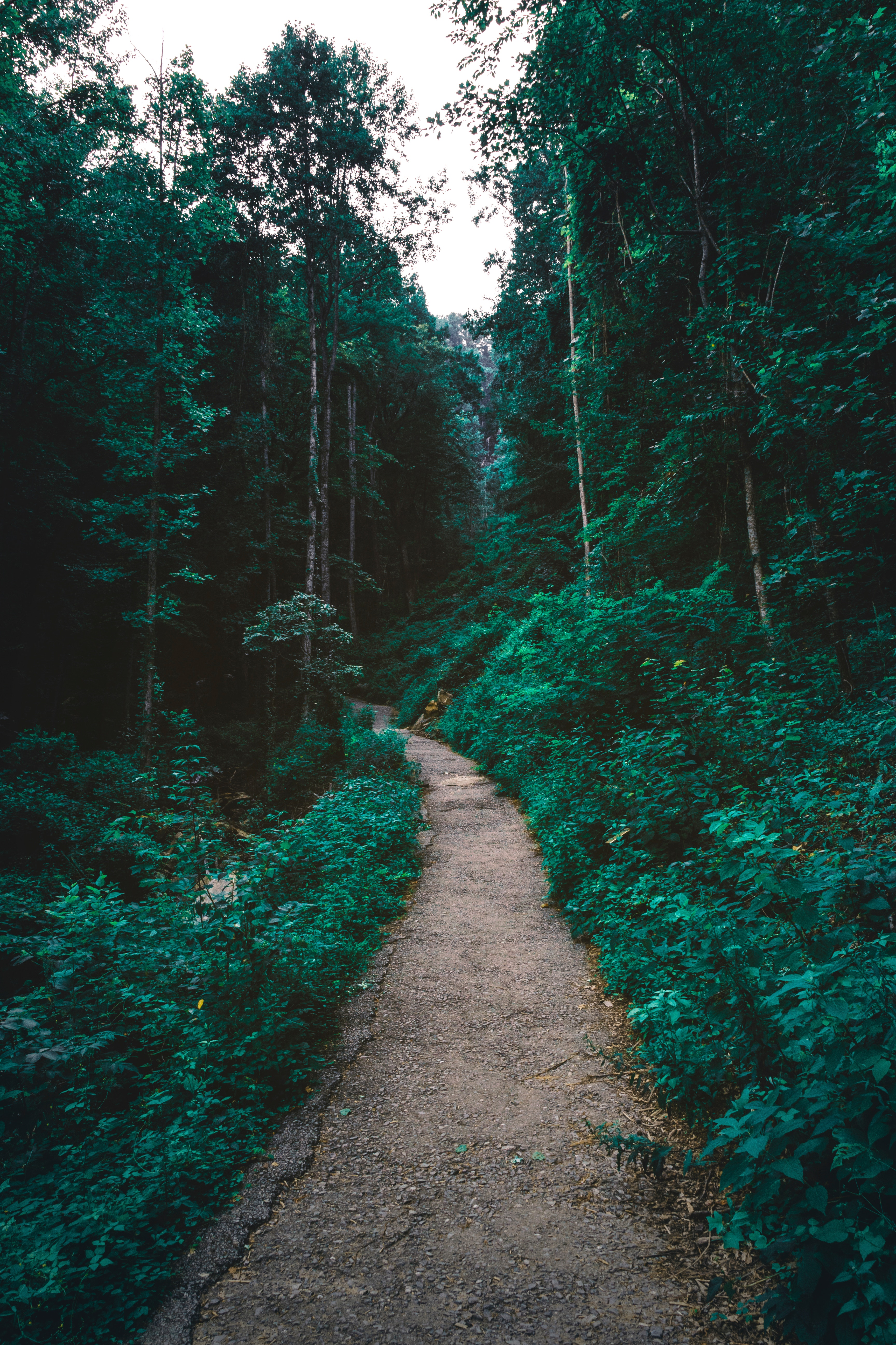 58313 Screensavers and Wallpapers Path for phone. Download Nature, Trees, Forest, Path pictures for free