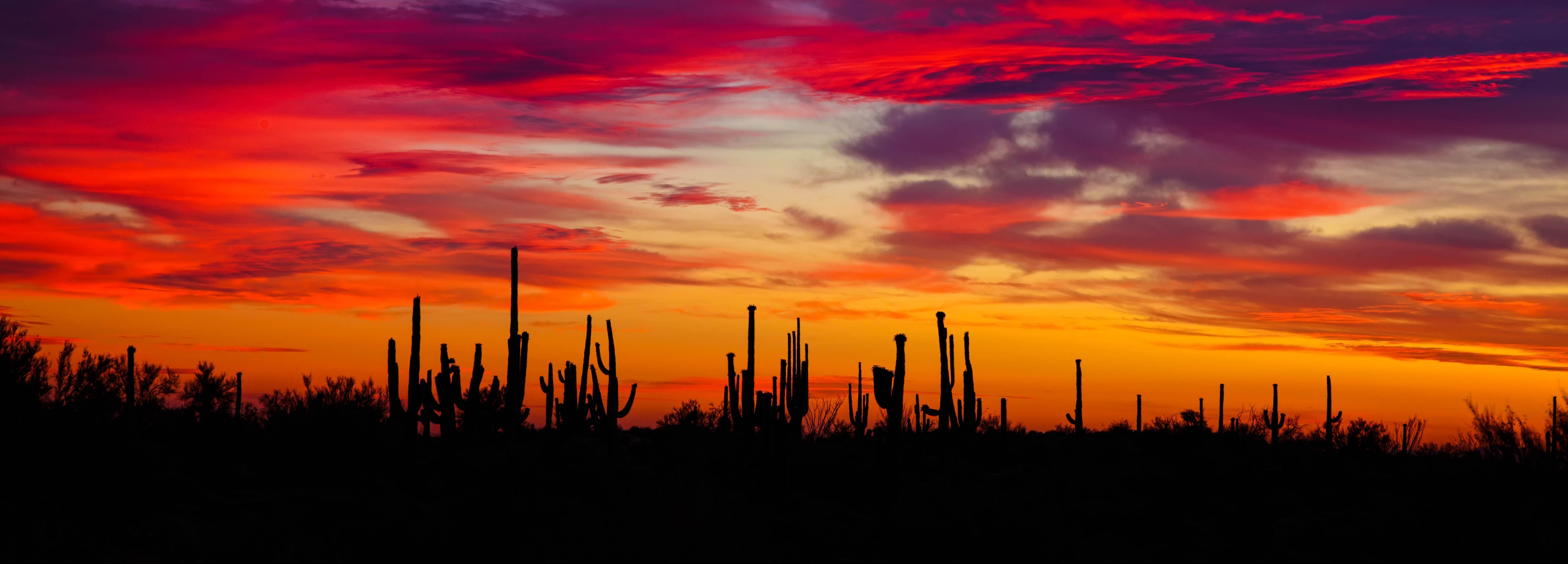 64248 скачать обои Природа, Кактусы, Закат, Силуэты, Аризона - заставки и картинки бесплатно
