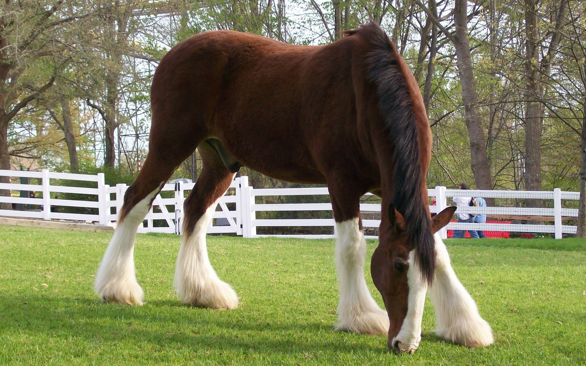 41550 download wallpaper Animals, Horses screensavers and pictures for free