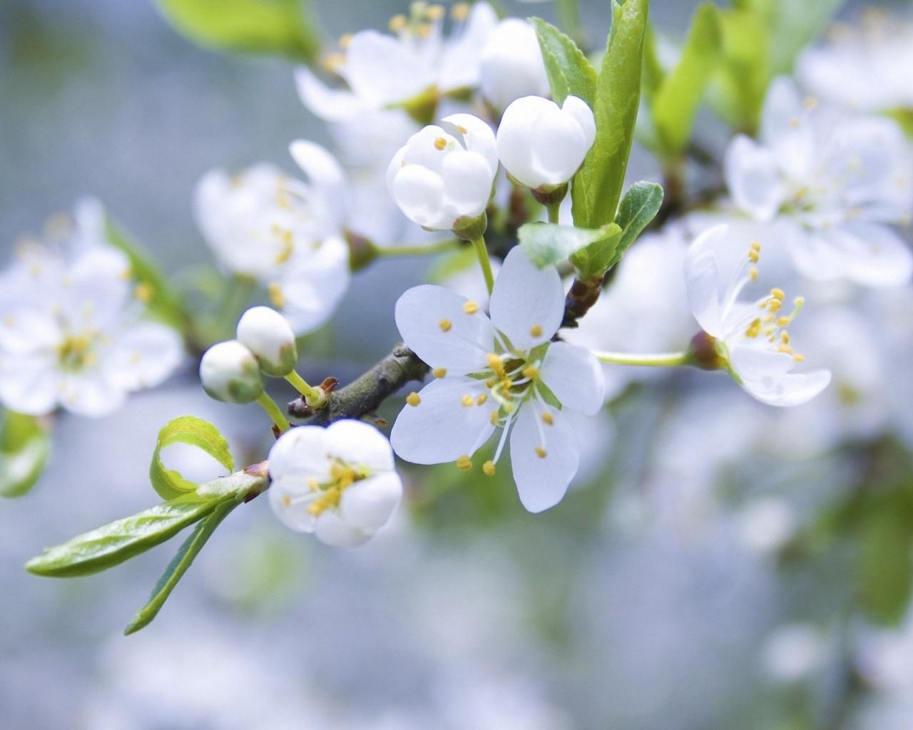 Handy-Wallpaper Pflanzen, Blumen, Bäume kostenlos herunterladen.