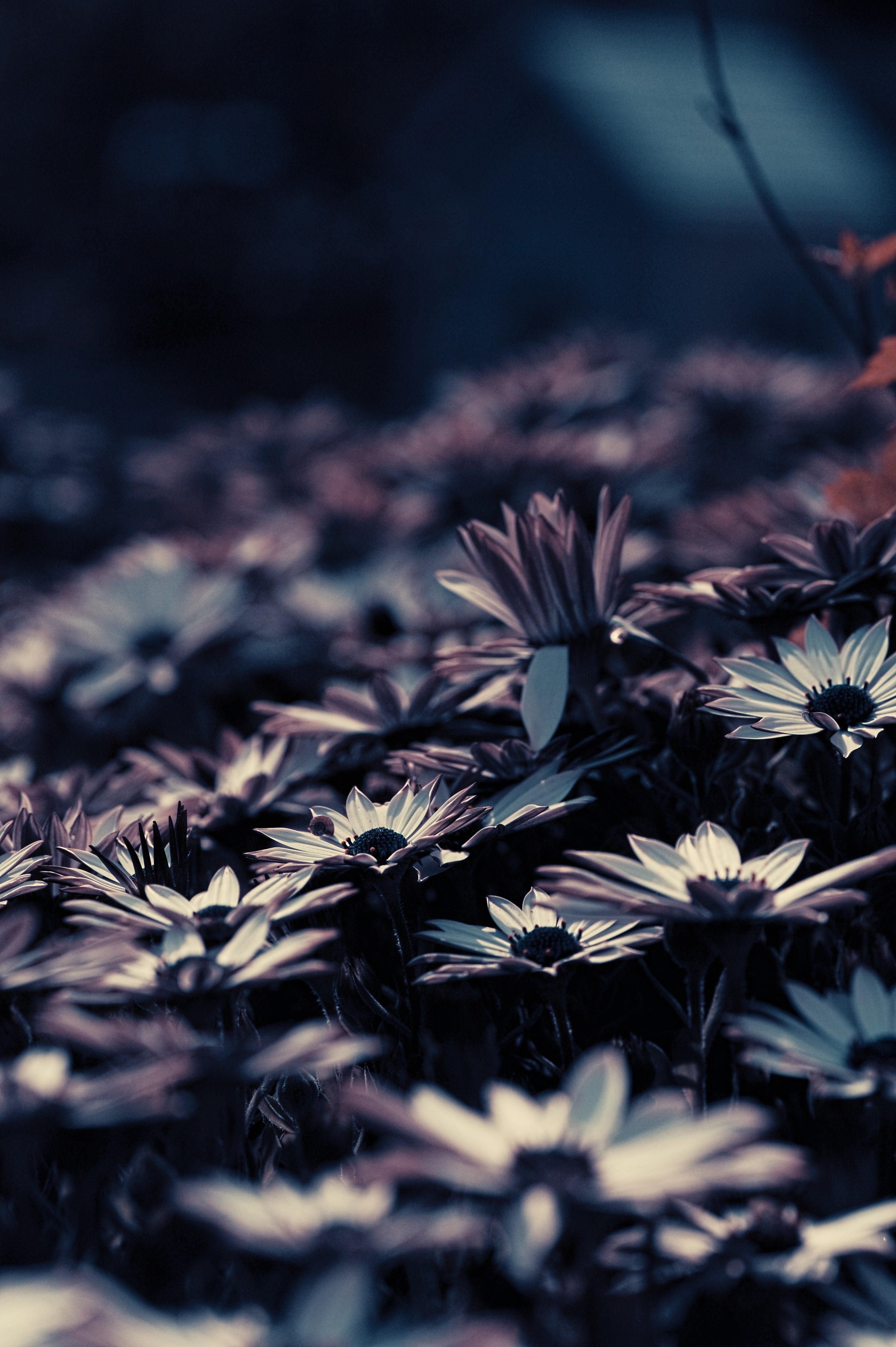 95635 Screensavers and Wallpapers Flower Bed for phone. Download Flowers, Blur, Smooth, Flower Bed, Flowerbed pictures for free