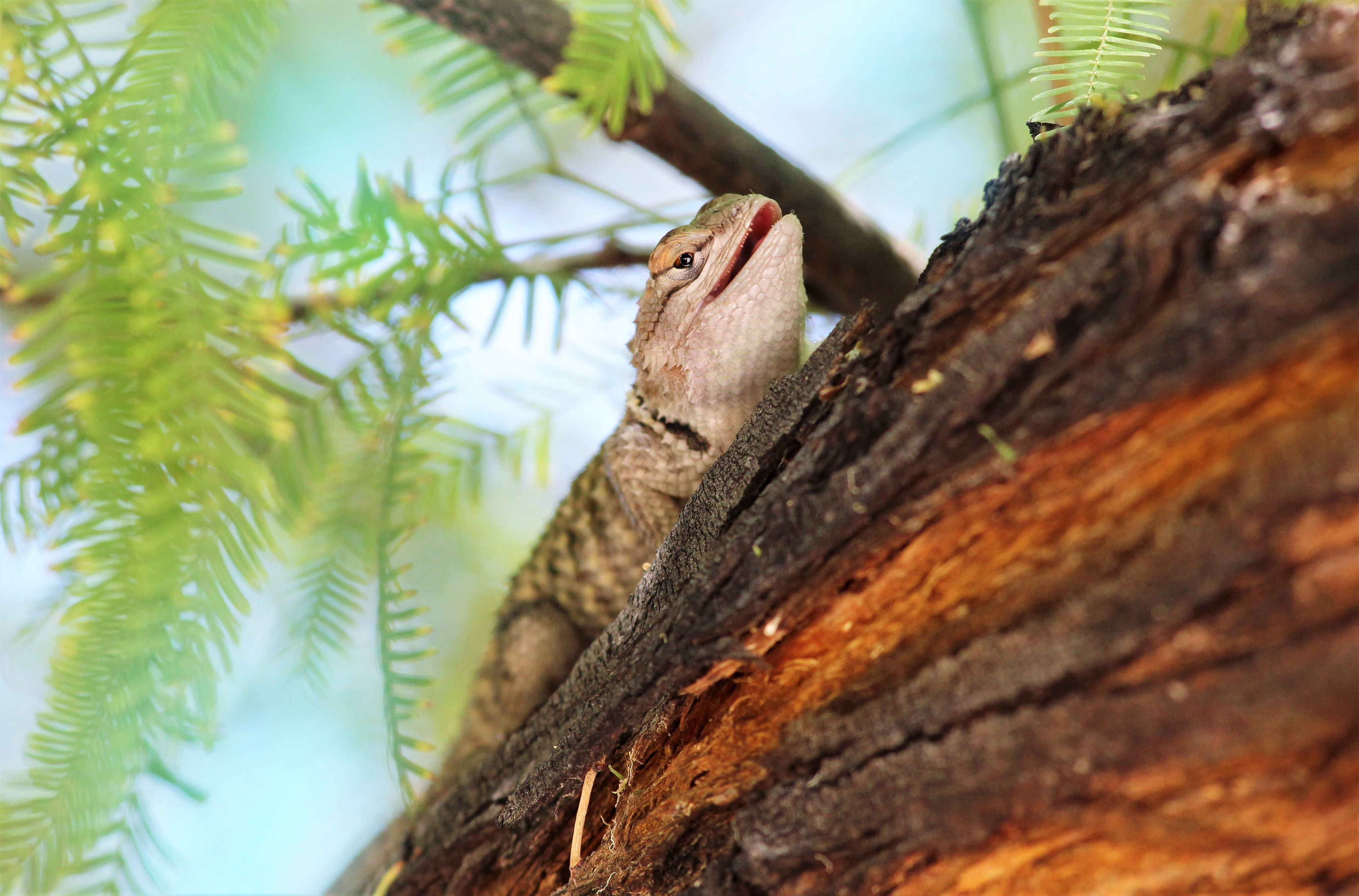 112427 download wallpaper Animals, Lizard, Gecko, Animal, Branch screensavers and pictures for free