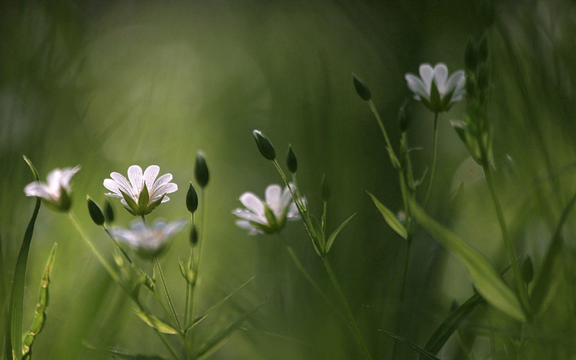 157371 скачать обои Макро, Цветы, Трава, Размытость - заставки и картинки бесплатно