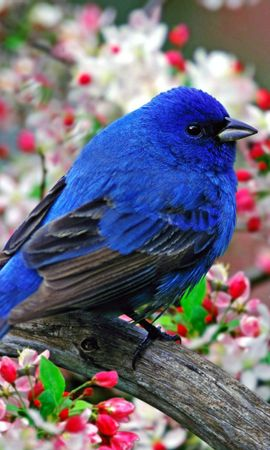 6666 download wallpaper Animals, Flowers, Birds screensavers and pictures for free