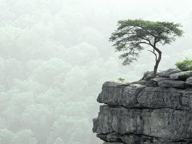 30384 скачать обои Пейзаж, Деревья, Горы - заставки и картинки бесплатно