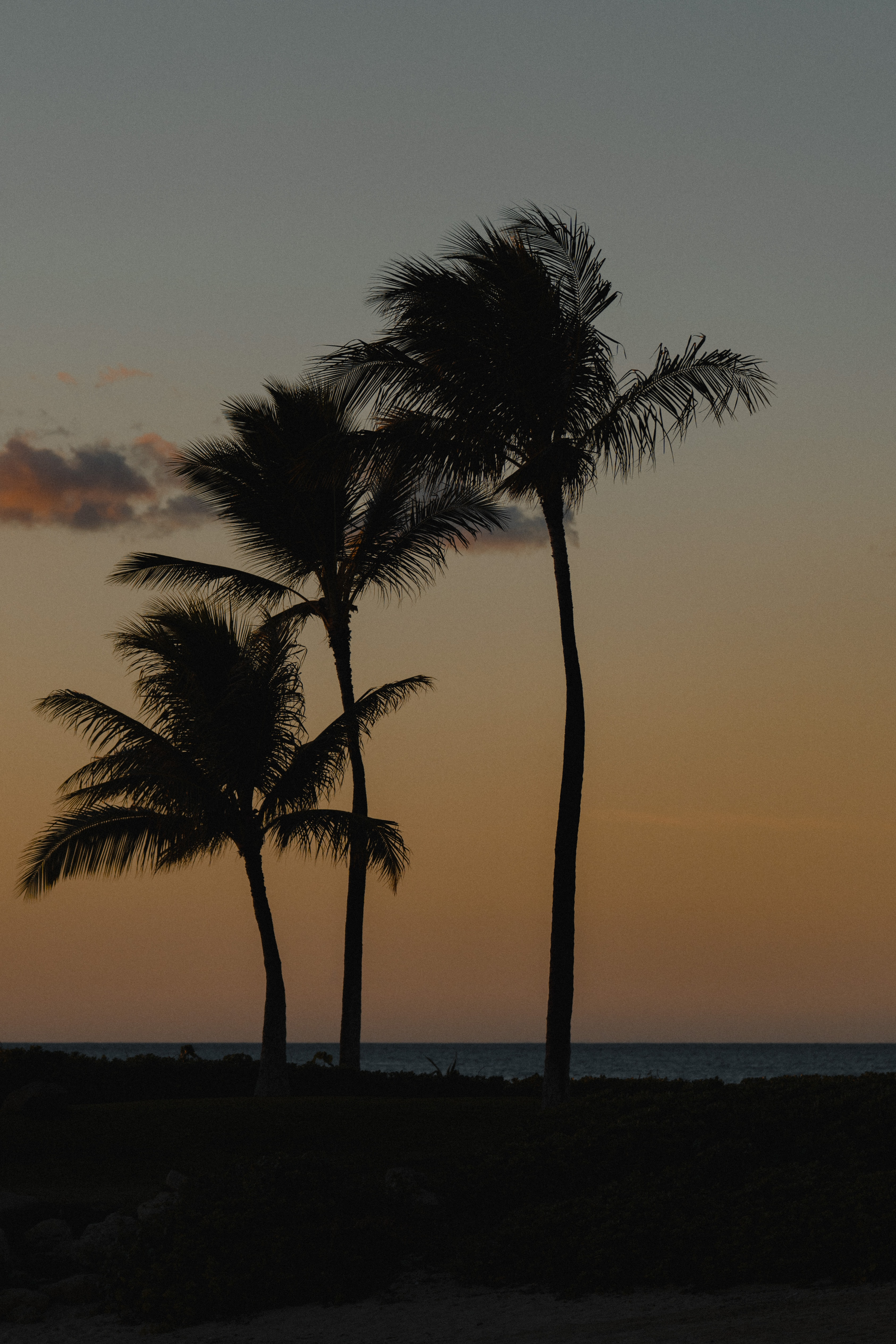 95056 Screensavers and Wallpapers Beach for phone. Download Beach, Nature, Twilight, Palms, Dusk, Evening pictures for free