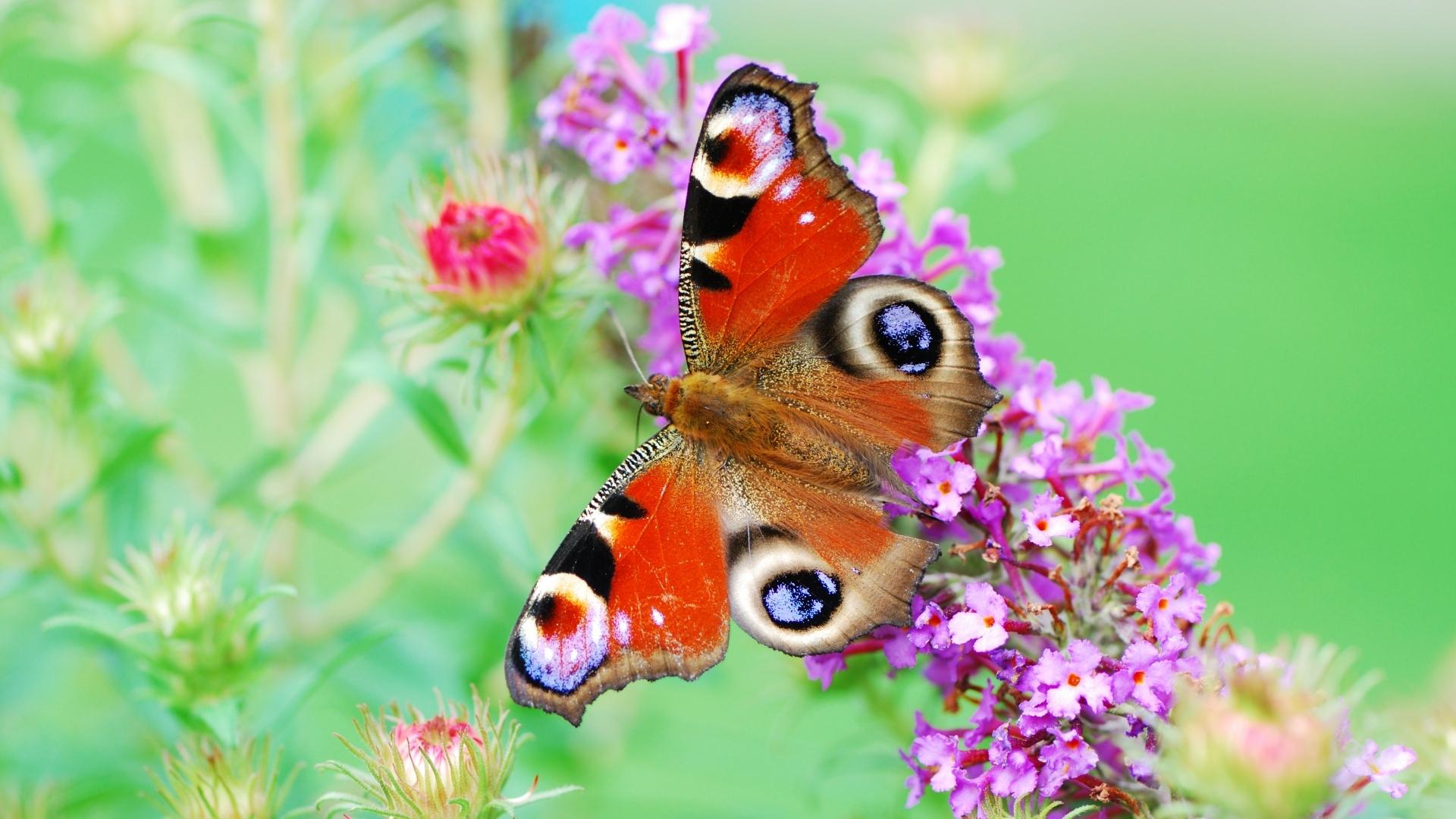 35190 Salvapantallas y fondos de pantalla Mariposas en tu teléfono. Descarga imágenes de Mariposas, Insectos gratis