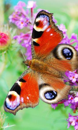 35190 Salvapantallas y fondos de pantalla Insectos en tu teléfono. Descarga imágenes de Mariposas, Insectos gratis
