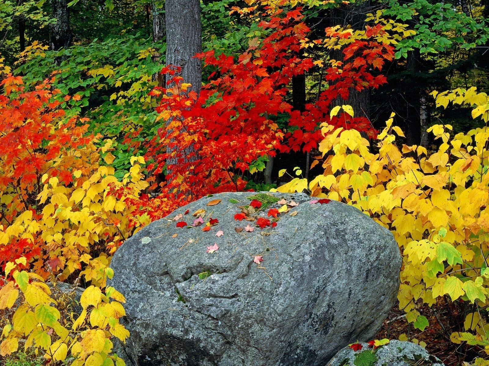 1806 скачать обои Растения, Пейзаж, Камни, Осень, Листья - заставки и картинки бесплатно