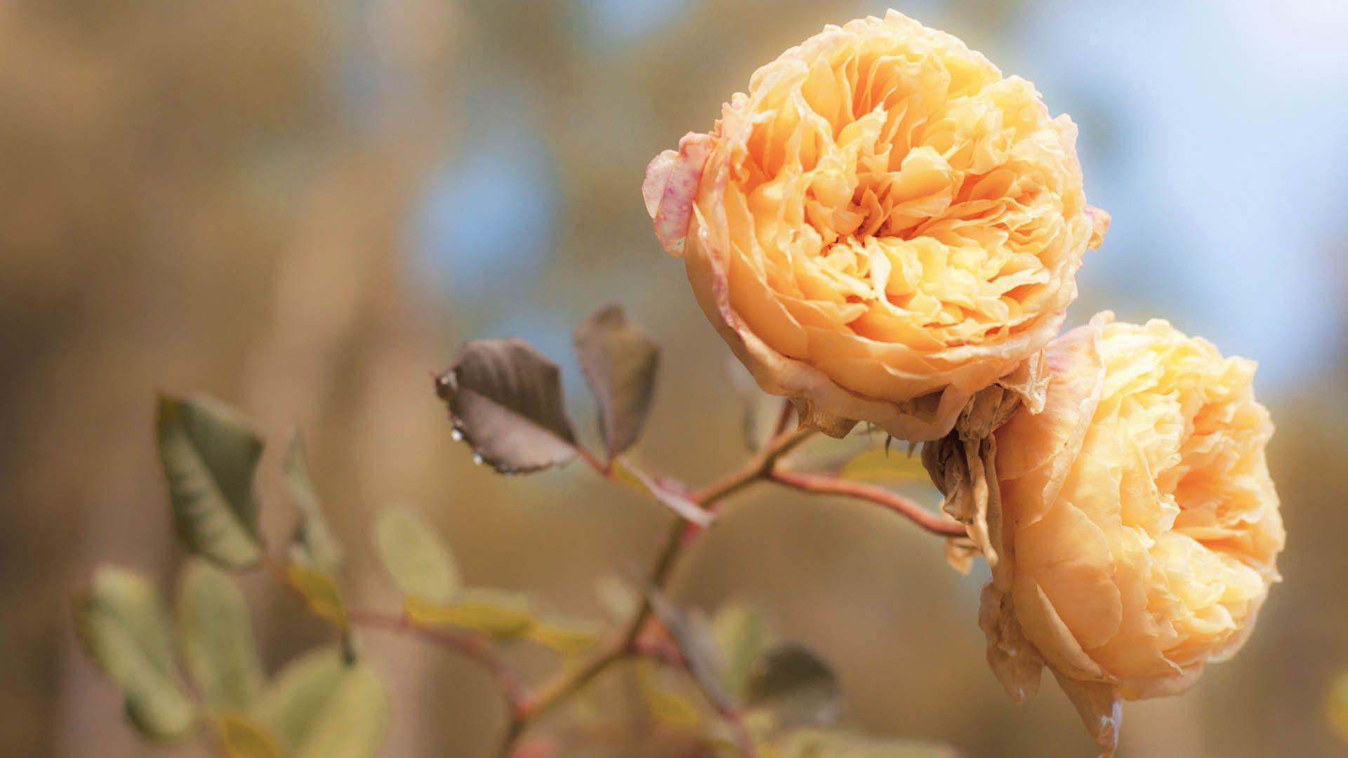 107579 免費下載壁紙 花卉, 芽, 布顿, 干, 茎, 明亮的, 明亮 屏保和圖片