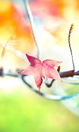 21220 скачать обои Растения, Деревья, Листья - заставки и картинки бесплатно