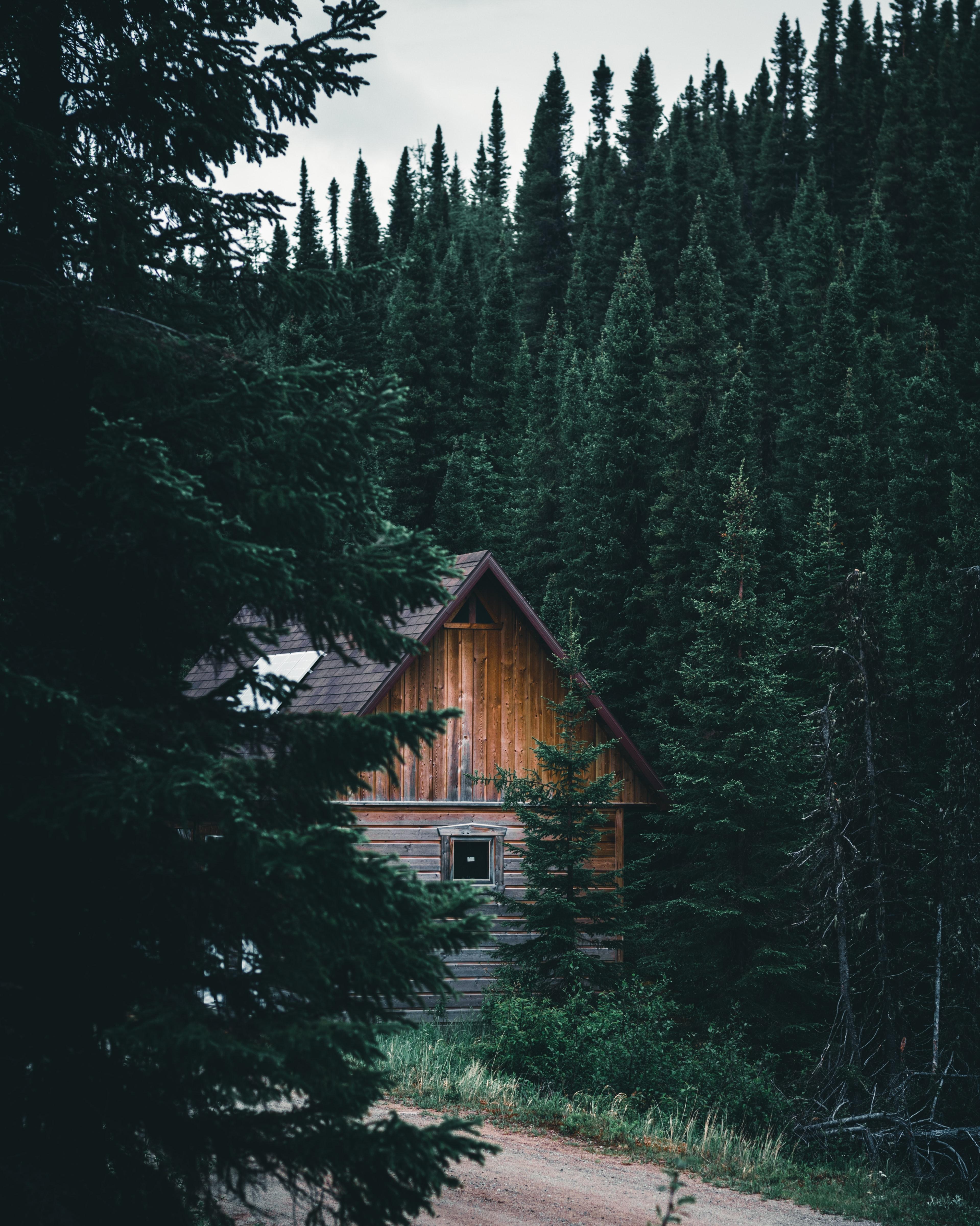 104703 скачать обои Лес, Природа, Ветки, Дом, Ель, Хижина - заставки и картинки бесплатно