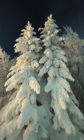 22631 скачать обои Растения, Зима, Деревья, Снег, Елки - заставки и картинки бесплатно