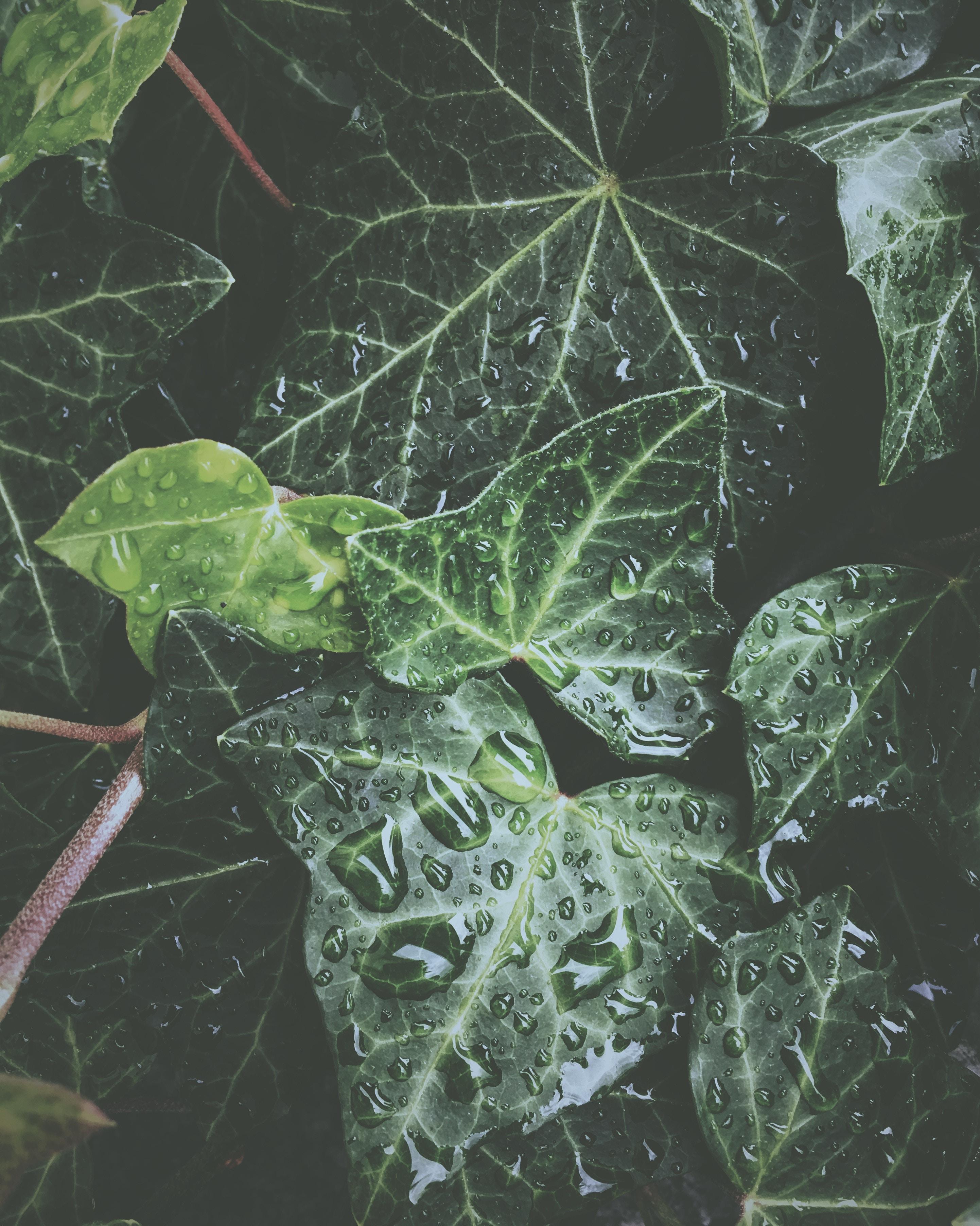 76327 скачать обои Вода, Листья, Капли, Растение, Макро, Поверхность, Роса, Экзотический, Глянцевый - заставки и картинки бесплатно
