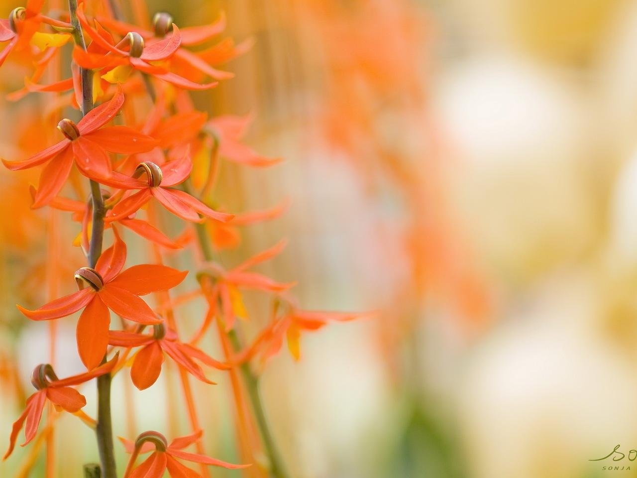 14733 descargar fondo de pantalla Plantas, Flores: protectores de pantalla e imágenes gratis