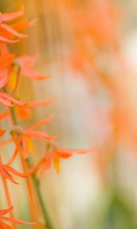 14733 скачать обои Растения, Цветы - заставки и картинки бесплатно