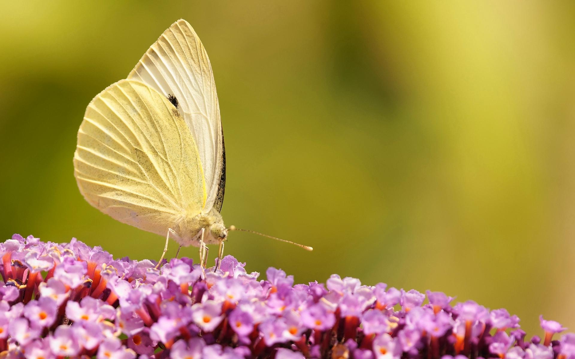 40134 Salvapantallas y fondos de pantalla Insectos en tu teléfono. Descarga imágenes de Mariposas, Insectos gratis