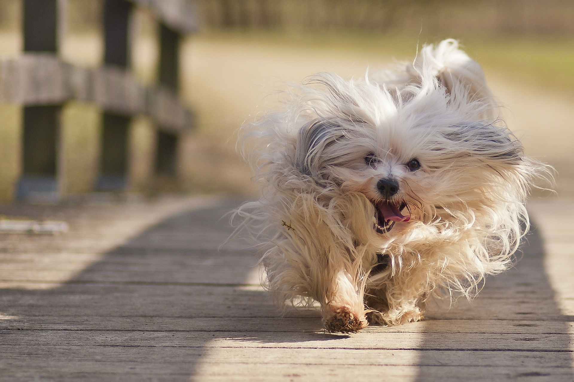 133761 Screensavers and Wallpapers Fluffy for phone. Download Animals, Fluffy, Dog, Run Away, Run pictures for free