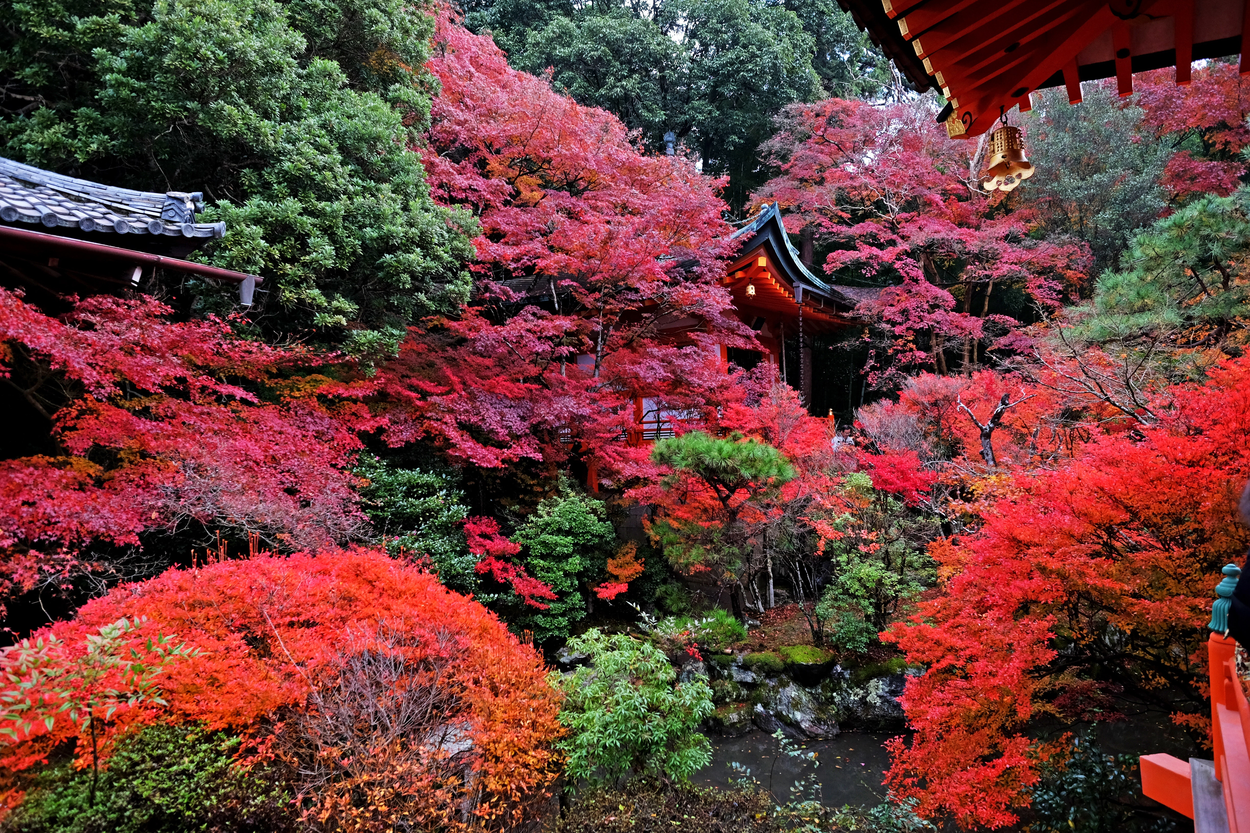 103869 download wallpaper Nature, Autumn, Japan, Temple, Kyoto screensavers and pictures for free