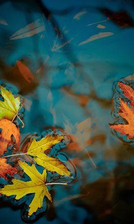 14825 скачать обои Растения, Вода, Осень, Листья - заставки и картинки бесплатно