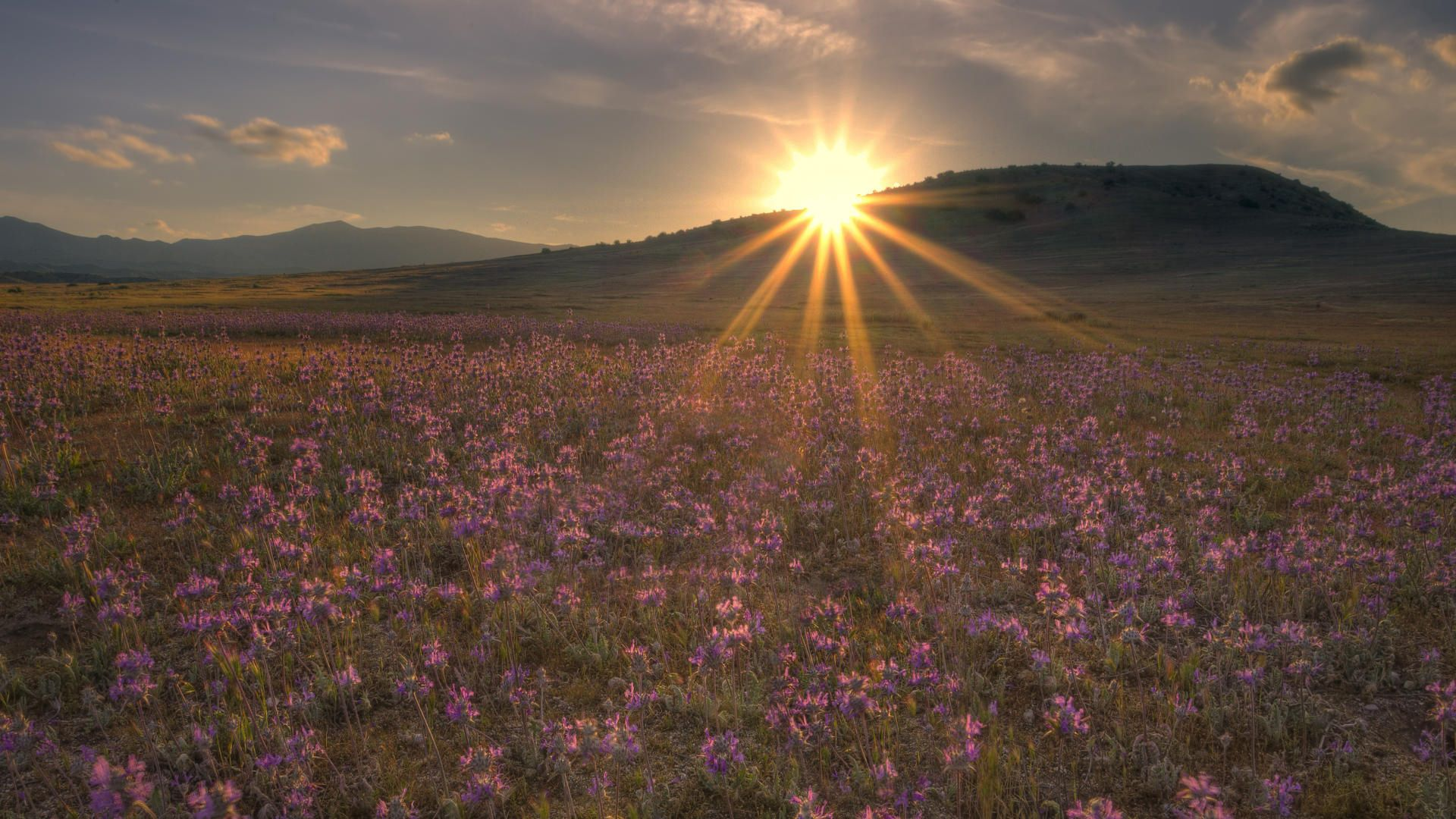 121632 Screensavers and Wallpapers Beams for phone. Download Nature, Flowers, Sunset, Sun, Shine, Light, Beams, Rays, Field, Evening pictures for free