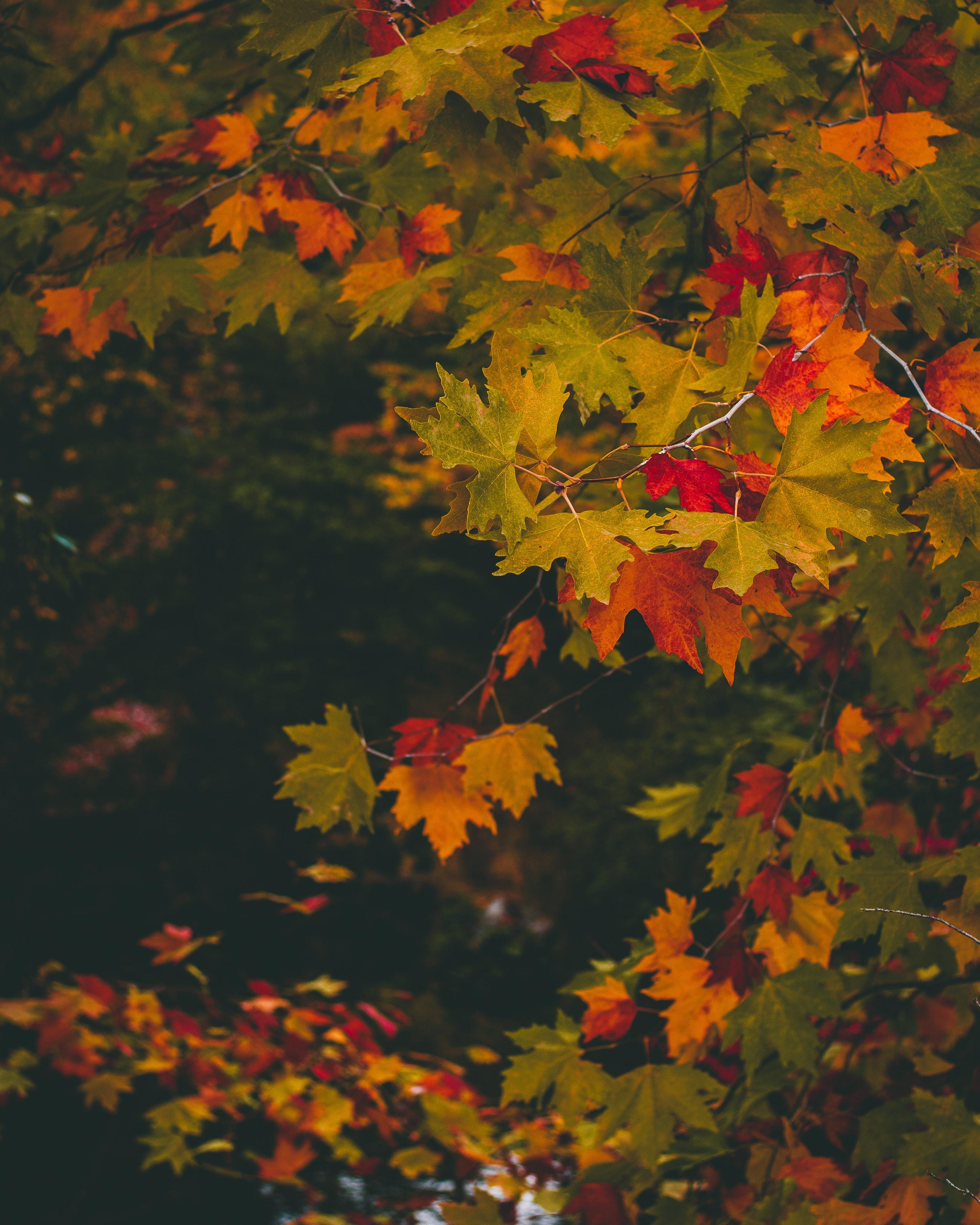 122087 Заставки и Обои Осень на телефон. Скачать Осень, Природа, Листья, Разноцветный, Размытость, Ветки, Клен картинки бесплатно