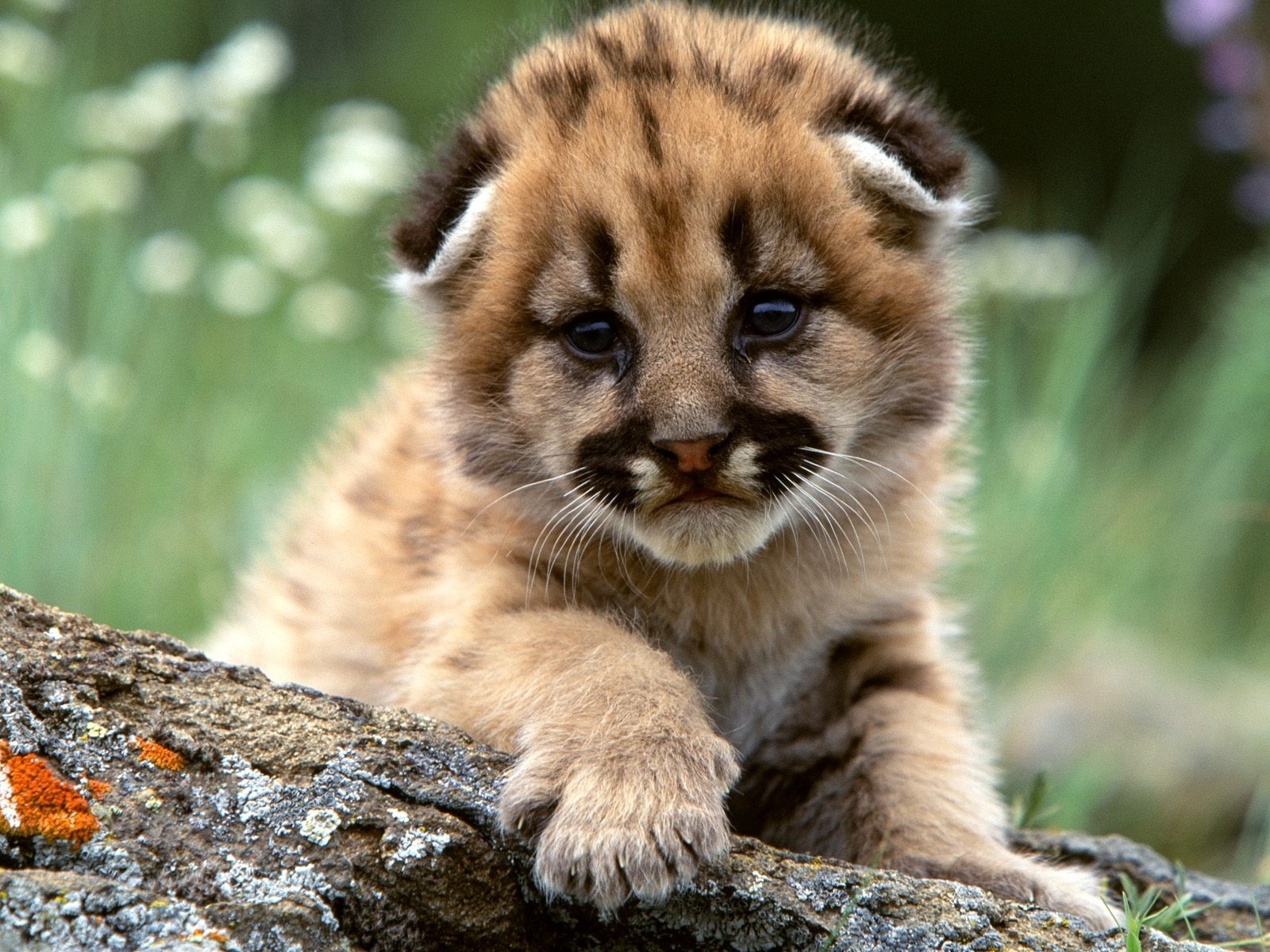 4375 download wallpaper Animals screensavers and pictures for free