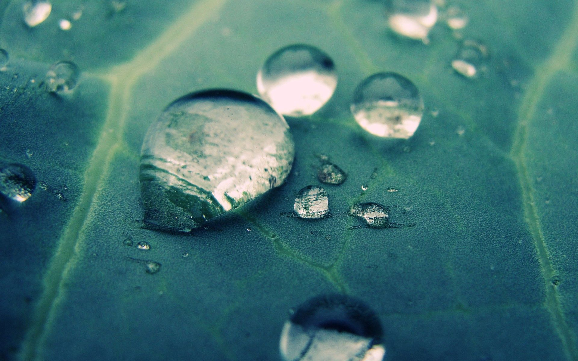 155006 download wallpaper Macro, Drops, Surface, Veins screensavers and pictures for free
