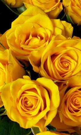143165 скачать обои Цветы, Букет, Яркие, Красота, Розы - заставки и картинки бесплатно