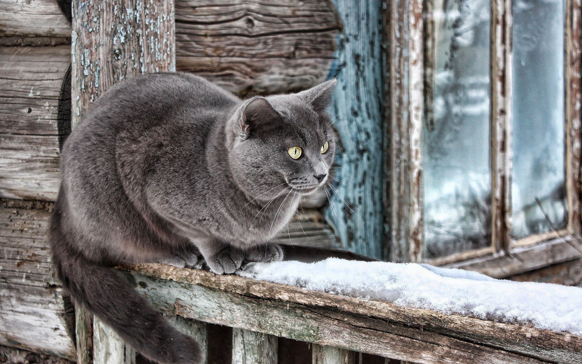 88389 Screensavers and Wallpapers Wool for phone. Download Animals, Wood, Wooden, Cat, House, Old, Window, Wool pictures for free