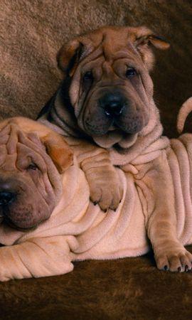 2848 descargar fondo de pantalla Animales, Perros: protectores de pantalla e imágenes gratis