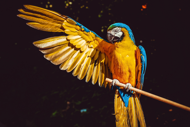 77652 Заставки и Обои Попугаи на телефон. Скачать Попугаи, Животные, Крыло, Взмах, Ара картинки бесплатно