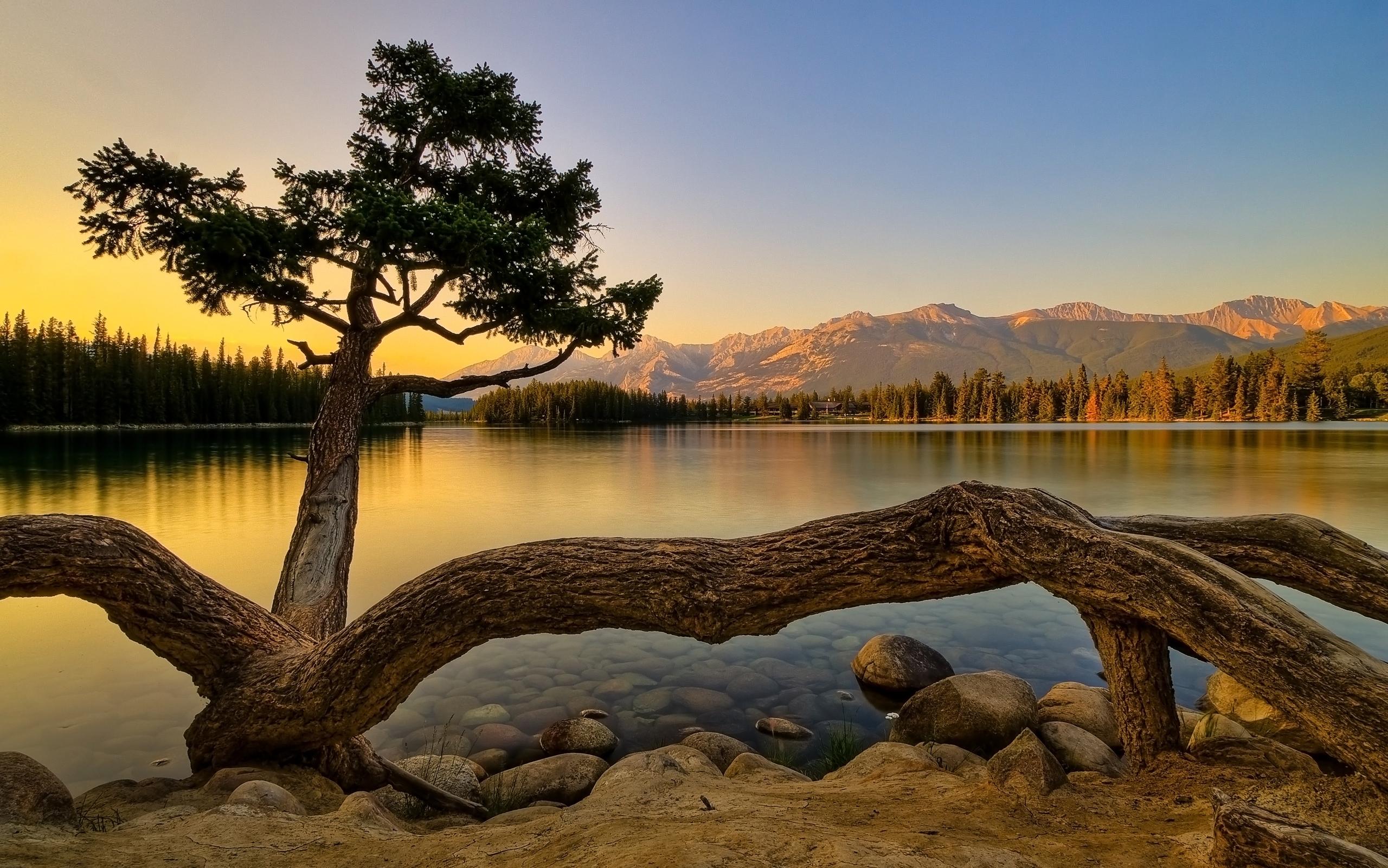 4909 скачать обои Пейзаж, Вода, Деревья, Озера - заставки и картинки бесплатно