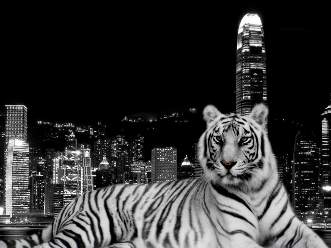 43777 descargar fondo de pantalla Animales, Paisaje, Tigres: protectores de pantalla e imágenes gratis