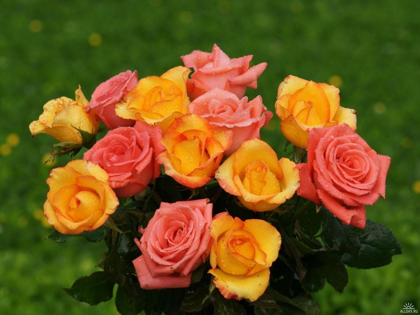 27689 скачать обои Растения, Цветы, Розы, Букеты - заставки и картинки бесплатно