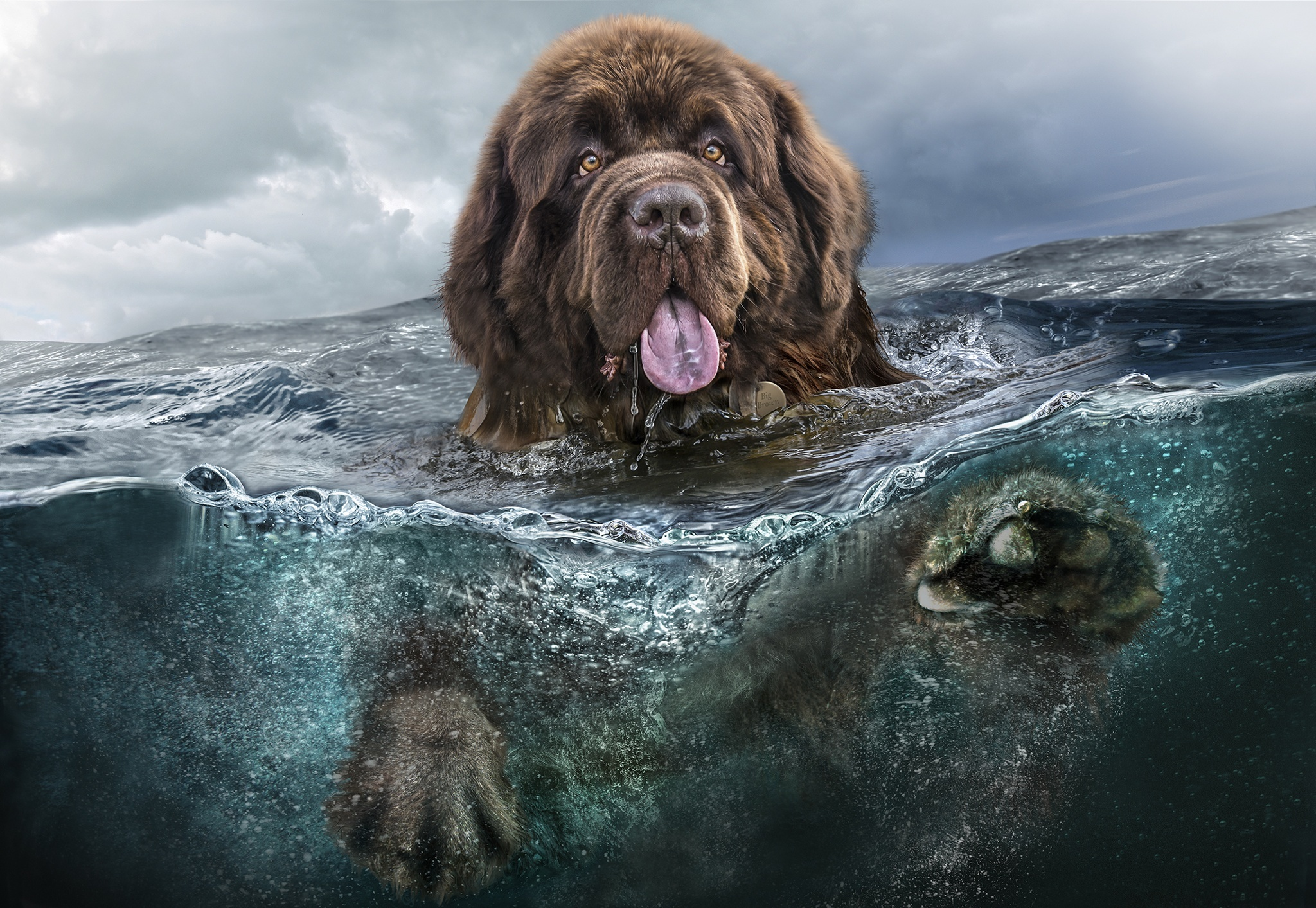 111409 download wallpaper Animals, Water, Sea, Dog, To Swim, Swim, Language, Tongue screensavers and pictures for free