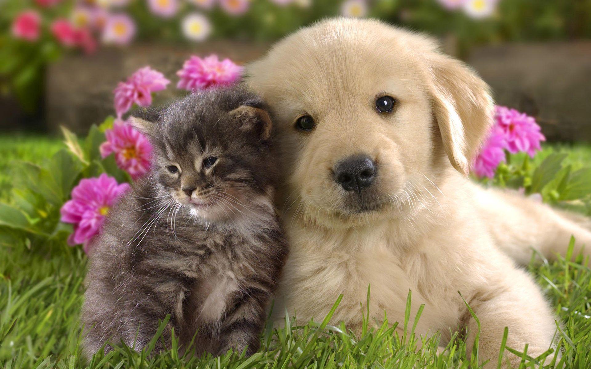 103542 завантажити шпалери Квіти, Кошеня, Тварини, Трава, Дружба, Пара, Щеня, Цуценя - заставки і картинки безкоштовно